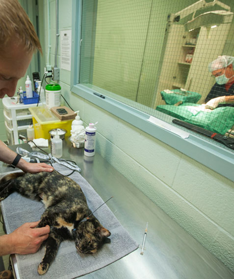 Tyler and Vet working on cats