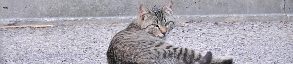 Research Cat Header