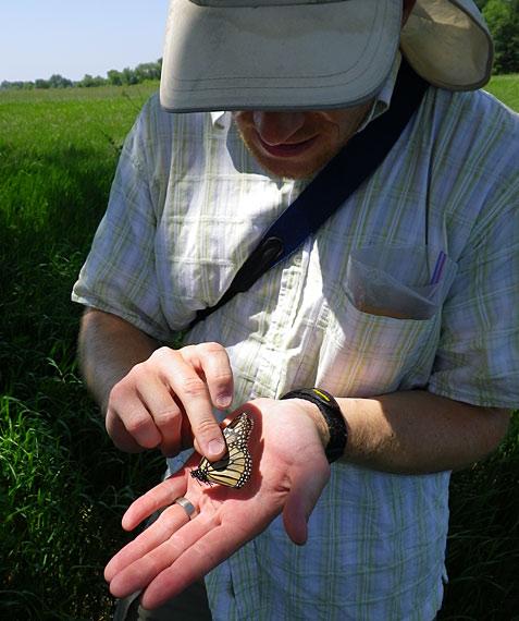 monarch fieldwork