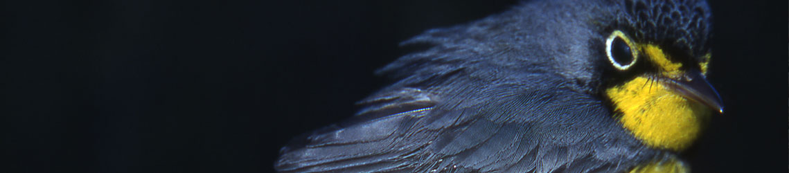 Research-Warbler-header