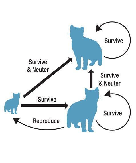 Population Dynamic Cat figure 1