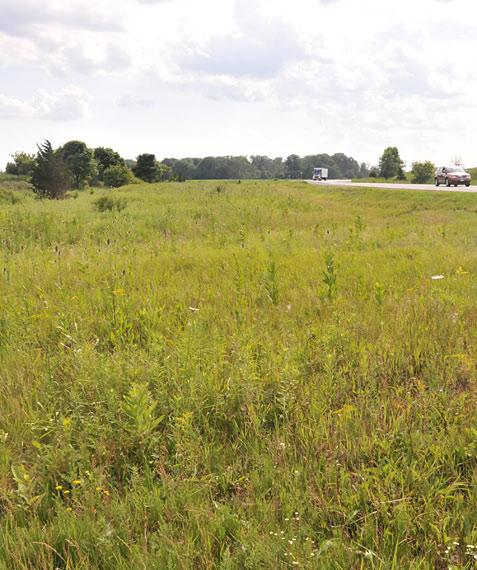 field by roadside