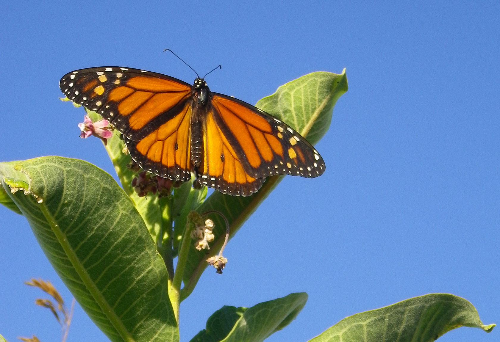 Home Full Monarch